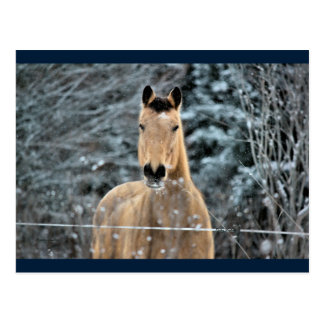 Buckskin Horse Winter Postcard