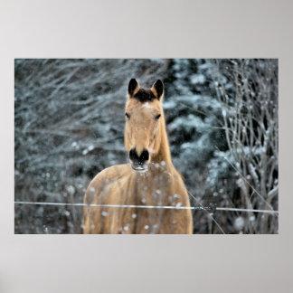 Buckskin Horse Winter Poster