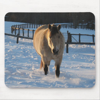 Buckskin in the snow mouse pads