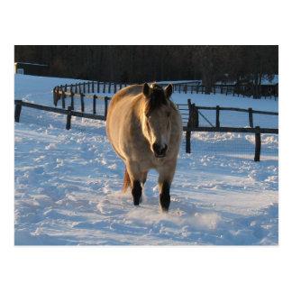 Buckskin in the snow post cards