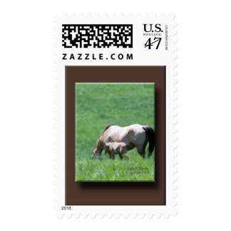 Buckskin Mare and Foal Postage