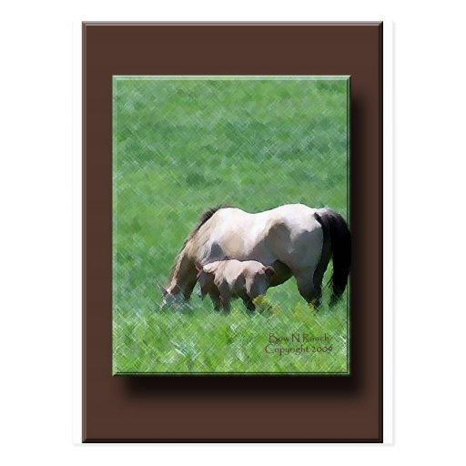 Buckskin Mare and Foal Postcard