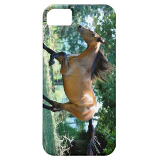 Buckskin Morgan Horse iPhone SE/5/5s Case