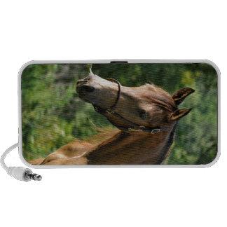Buckskin Morgan Horse Mp3 Speaker