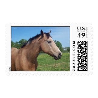 Buckskin Mustang Postage Stamp