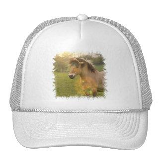 Buckskin Pony Baseball Hat