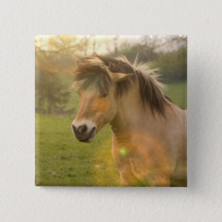 Buckskin Pony Square Pin