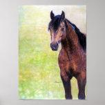Buckskin Quarter Horse Halter Horse Portrait Poster