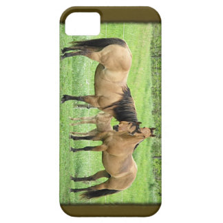 Buckskin Quarter Horses iPhone 5/5S Case