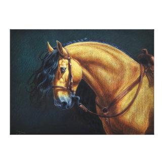 Buckskin Stallion Canvas Print