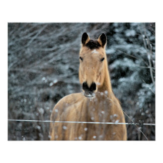 Buckskin Winter Poster