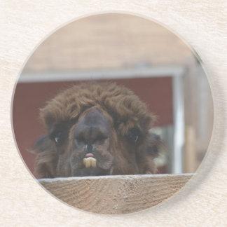 bucktoothed alpaca beverage coaster