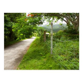 Bucolic Caribbean Island Road Postcard