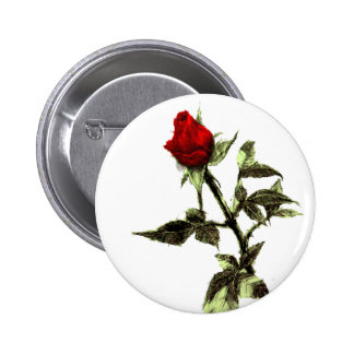 Bud of the red rose penciled button