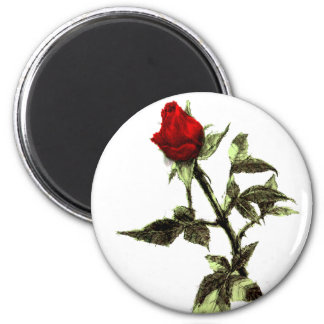 Bud of the red rose penciled magnet