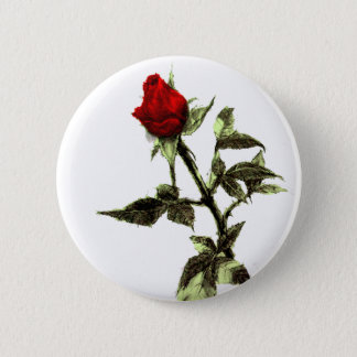 Bud of the red rose penciled pinback button