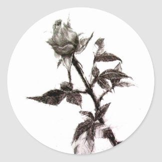Bud of the rose penciled classic round sticker