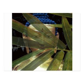 Buda de bambú tarjetas postales