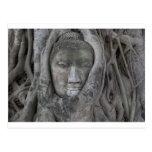 Buda en tree.jpg tarjeta postal
