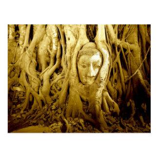 Buddha head entangled in fig roots, Ayutthaya Postcard