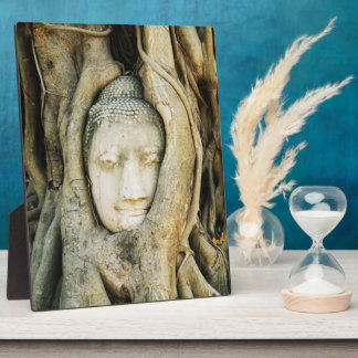 Buddha Head in the Fig Tree .. Ayutthaya, Thailand Photo Plaques