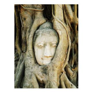 Buddha Head in the Fig Tree .. Ayutthaya, Thailand Postcard