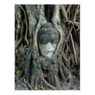 Buddha Head Postcards
