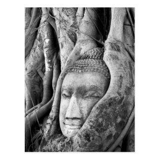 Buddha in a Tree Postcard