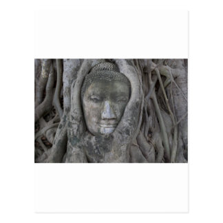 buddha in tree.jpg postcard