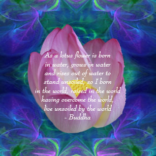 Lotus Flower Quote Art Wall Dcor Zazzle