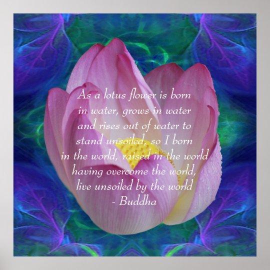 Buddha Quote Lotus Flower Poster Zazzlecom