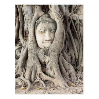 Buddha's head in Bodhi tree, Ayutthaya Postcard