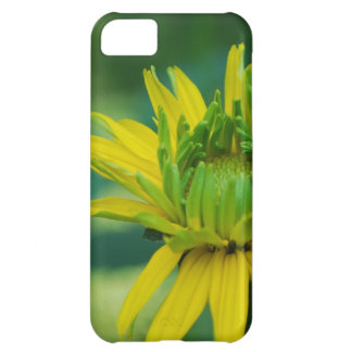 Budding False Sunflower Cover For iPhone 5C