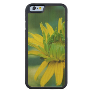 Budding False Sunflower Carved® Maple iPhone 6 Bumper Case