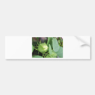 Budding Flower Bumper Sticker