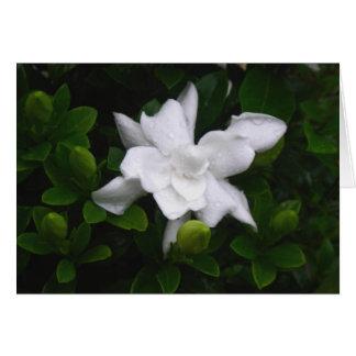 Budding Gardenias Floral Notecard Stationery Note Card