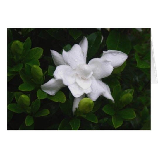 Budding Gardenias Floral Notecard