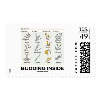 Budding Inside (Types Of Buds Biology Botany) Postage Stamps
