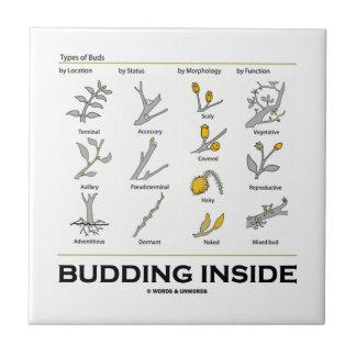 Budding Inside (Types Of Buds Biology Botany) Ceramic Tile