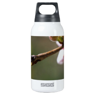Budding Insulated Water Bottle