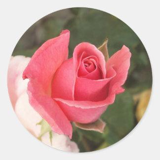 Budding Pink Rose Classic Round Sticker