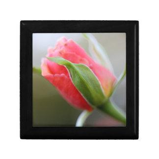 Budding Pink Rose in Early Morning Light Keepsake Box
