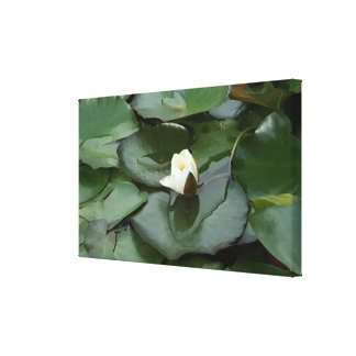 Budding Spiritually Stretched Canvas Prints