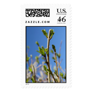 Budding Spring Leaves Stamp
