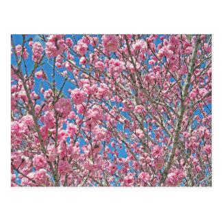 budding tree in pink postcard
