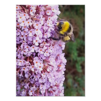 Buddleia Bumble Bee Poster