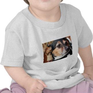 Buddy - Fox Terrier Photo-9 Shirts