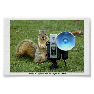 BUDDY P. SQUIRREL POSTER
