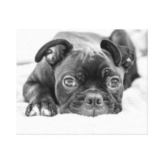 Buddy photographed by Jenny Potter Canvas Print
