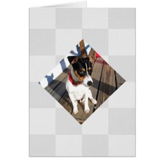 Buddy - Rat Terrier Greeting Card